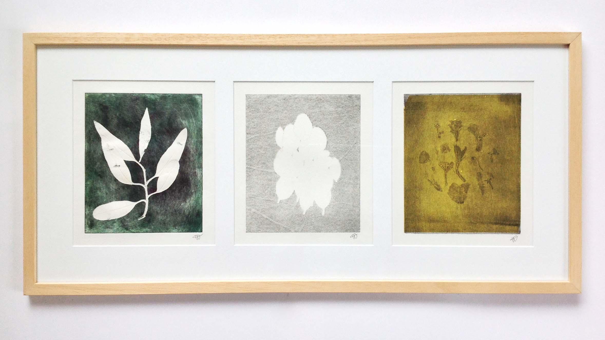 herbier caroline wehbe 2015 gravure engreving plants monotype print 201 art